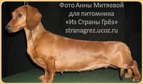 http://kennel-stranagrez.ru/Chempion/GLADKIE/azartn_igra/9.jpg
